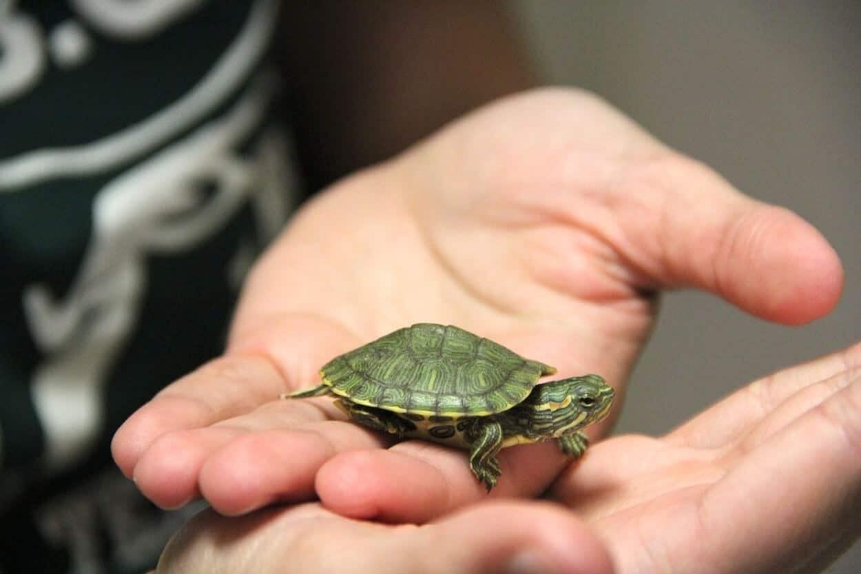 A pet turtle with a good name