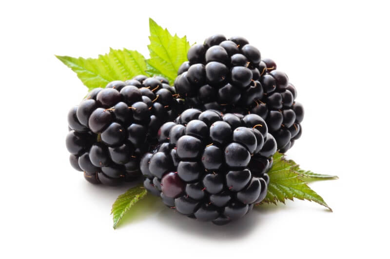 Three blackberries before being eaten by a bearded dragon