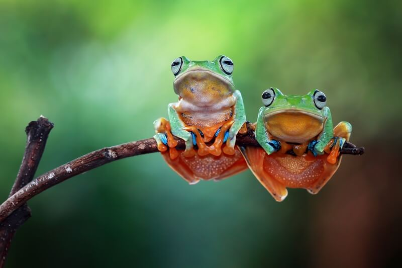 Two frogs with good names